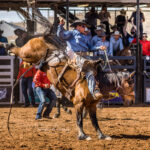 Tony Caldwell on board ''Miss Cactus' for 71pts in the short go for an aggregate 153pts to win the Tourism and Events Queensland Open Saddle Bronc champion title