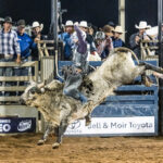 Dingo Cowboy Brody Woodard marks 82pts on board 'M60' to win the firstsection of the Mount Isa Mines Bull Ride Bull Ride