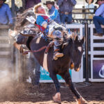 Felton South Cowboy John Hayward marks 69pts in the 1st section of the Mount Isa Airports 2nd Divi Bareback contest