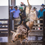 Heywood VIC Cowboy  Sam Woodall on board 'Specsaver' in section 2, Rd 1 of the Mount Isa Mines Open Bull Ride