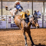 Wandoan Cowboy Dave Worsfold marks 72pts on board 'Western Girl' in the Bell and Moir Toyota Open Bareback contest