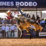 MI117158-Injune Cowboy Tom Webester gets a little air time and 75pts on board 'Buckskin Buck' in section 2 Rd 1 of the Bell and Moir Toyota Open Bareback contest