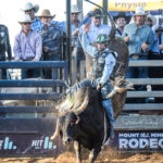 Troy Wilkinson on board 'Notorious' for the high point ride of the rodeo,  well deserved 87.50pts