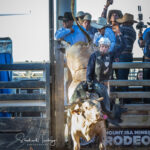 Dingo Cowboy Brody Woodard on board 'Hot Spider' in the Mount Isa Mines Open Bull Ride