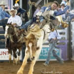 Brigalow Cowboy Dallas Hay marks 73pts in section 1, Rd 2 of the Bell and Moir Toyota Open Bareback contest