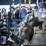 Walcha Cowboy Tyson Smith marks 84pts on board 'Gungatino' in section 2 Rd 2 of the Mount Isa Mines Open Bull Ride